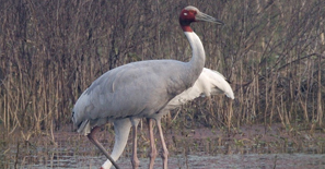 Keoladeo_National_Park