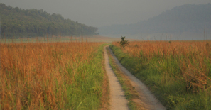 corbett-national-park4